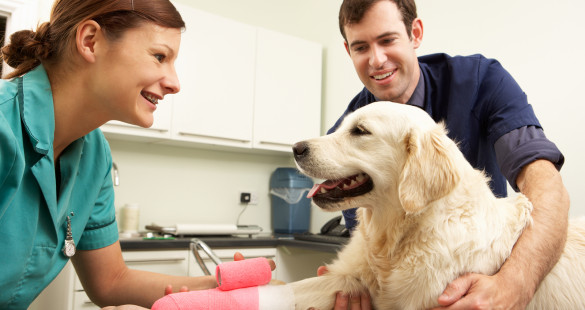 texas veterinary assistant training | schools and vet degrees